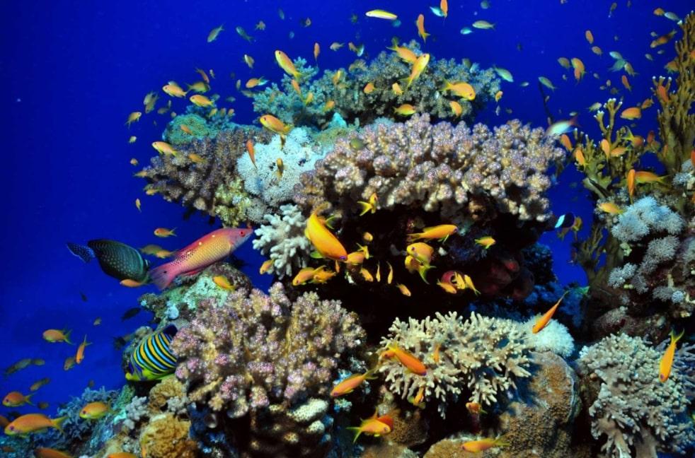 Snorkeling dengan Arus Laut yang Tenang