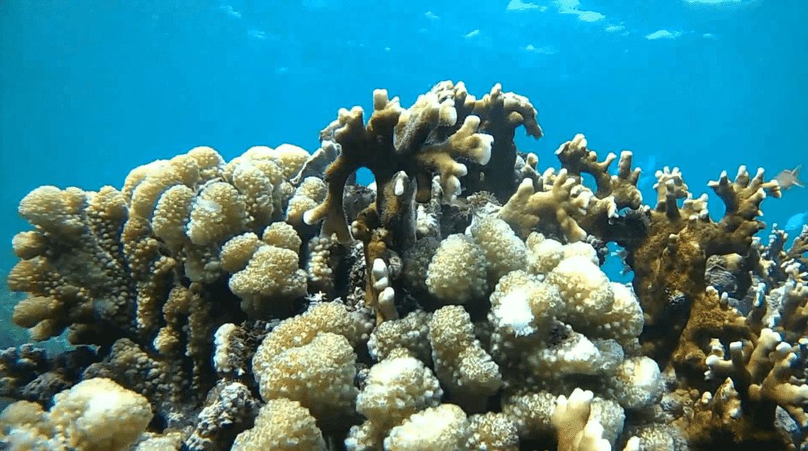 Underwater Pantai Bangsring
