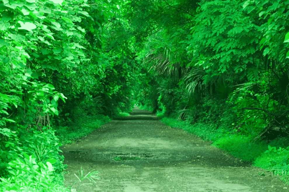 Serunya Melewati Hutan Evergreen
