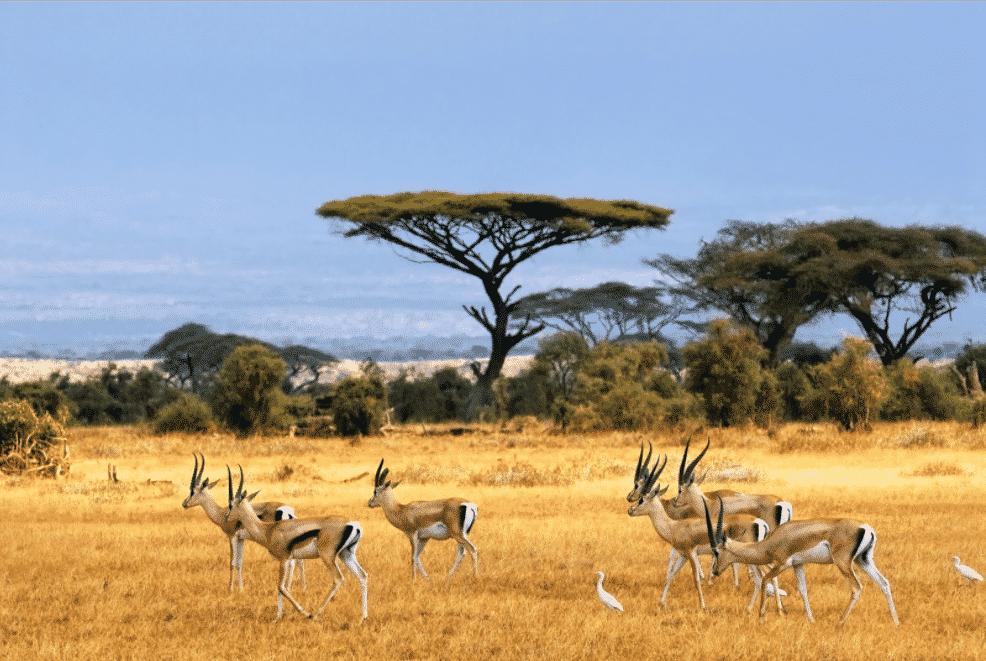 Luasnya Padang Rumput Taman Nasional Baluran
