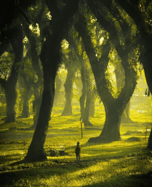 Nikmatnya piknik di hutan trembesi