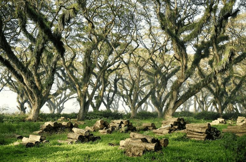 Banyaknya Jenis Pepohonan