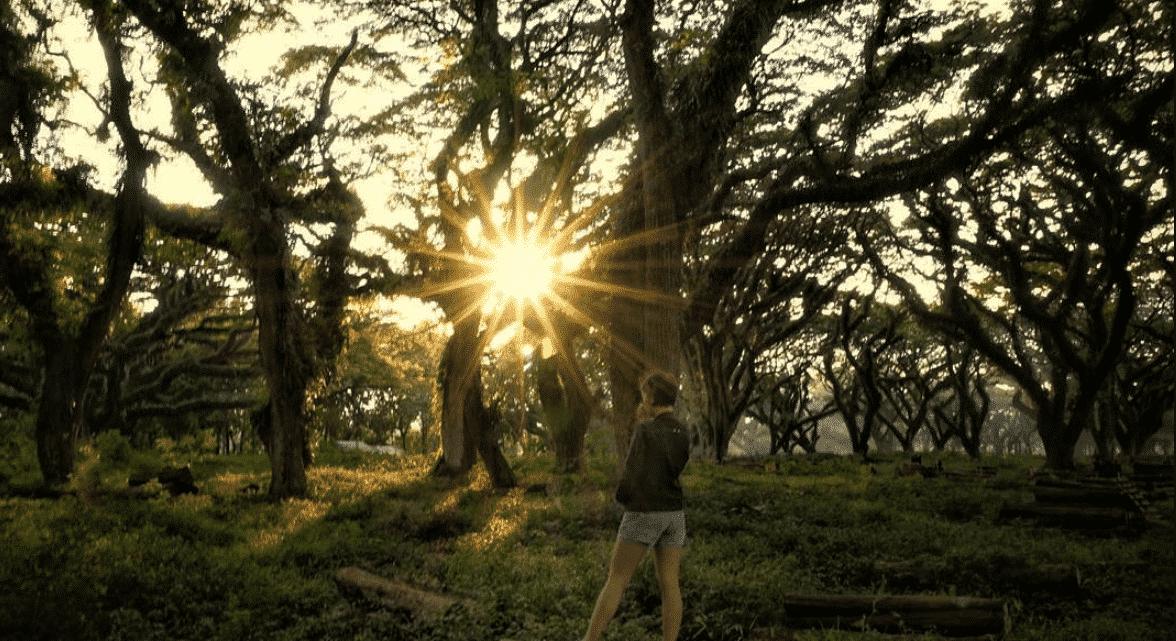 Sunset Alami dari Hutan Trembesi