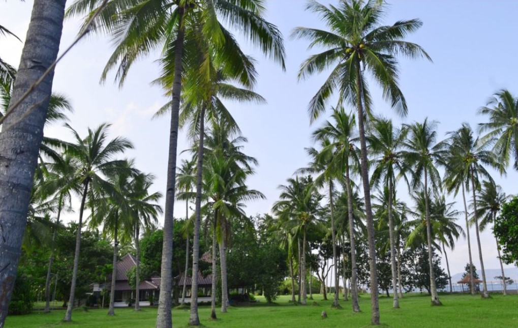 Taman Dekat Pantai Cacalan