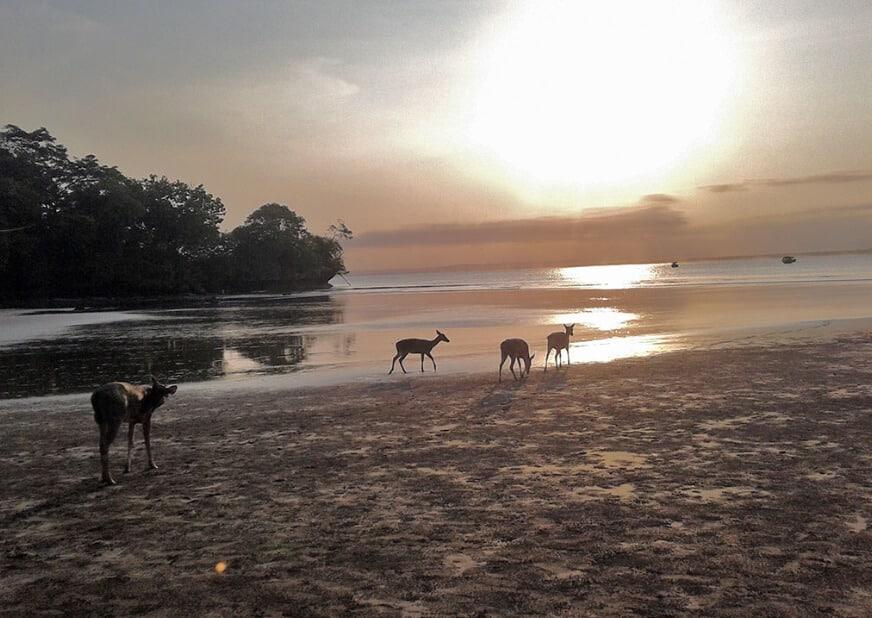 Pantai Pananjung dekat Suaka Margasatwa