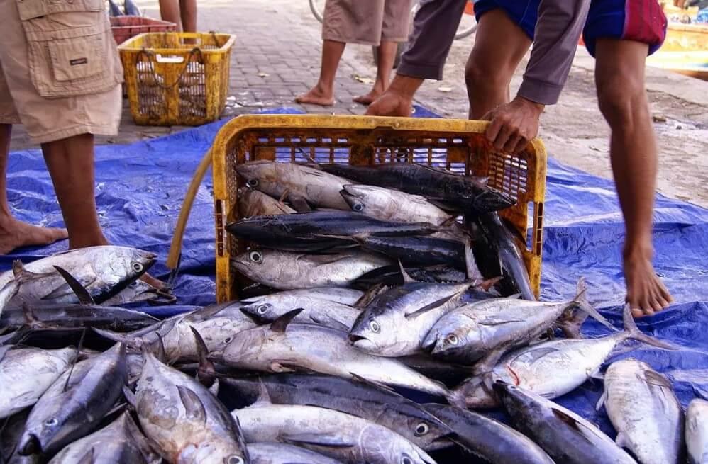 Oleh Oleh Ikan Pantai Palatar Agung
