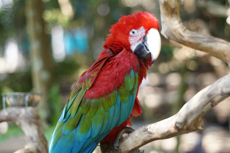 bird & bromelia pavilion kabupaten bandung barat jawa barat
