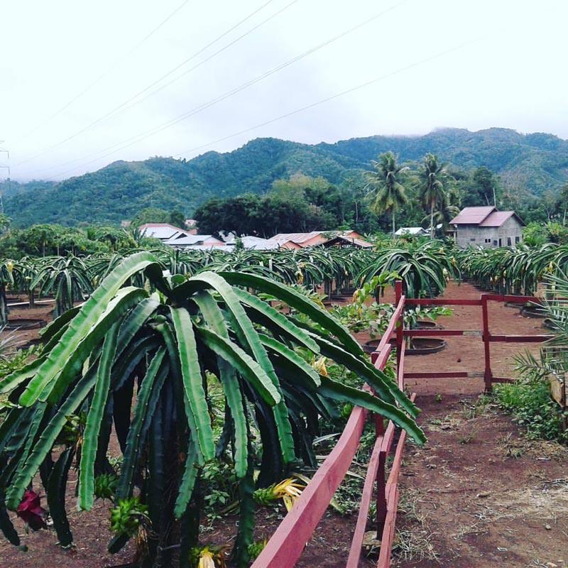 cafe di padang sidempuan sumatera