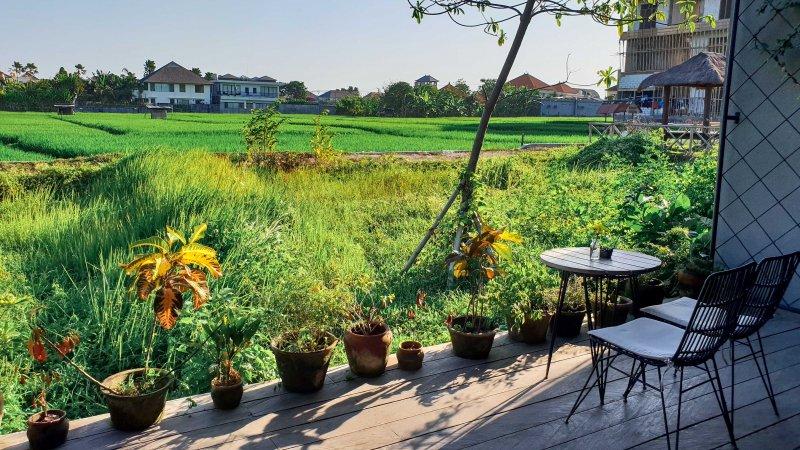 Tempat Nongkrong di Canggu alami