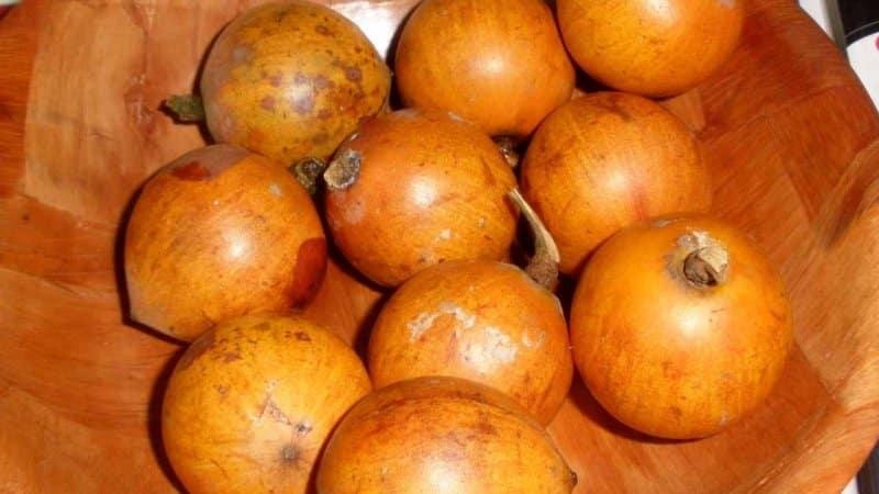 buah khas nigeria