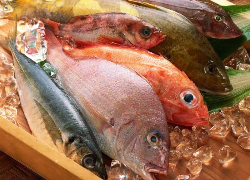 bonggolan ikan