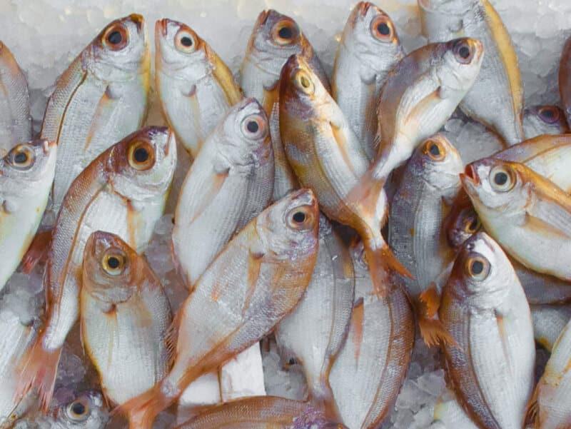 Ikan-cara