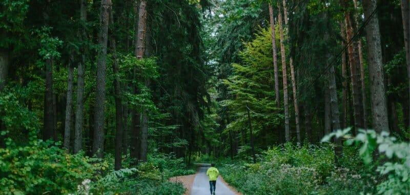 Hutan-Depok