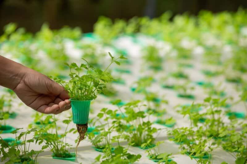 Mama-Farm-Hidroponik-Garden