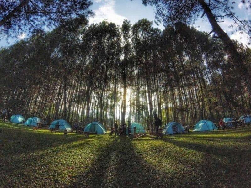 Pine-Forest-Camp-Lembang