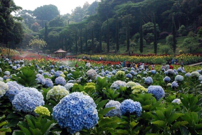 Taman-Bunga-Cihideung