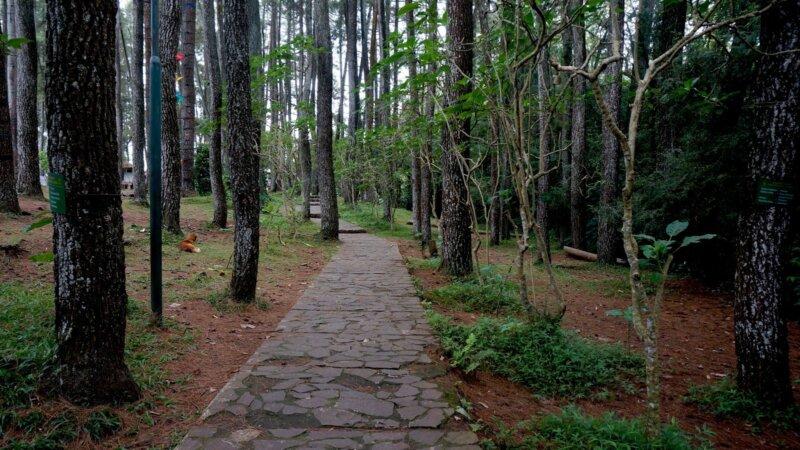 Taman-Hutan-Raya-Pancoran-Mas