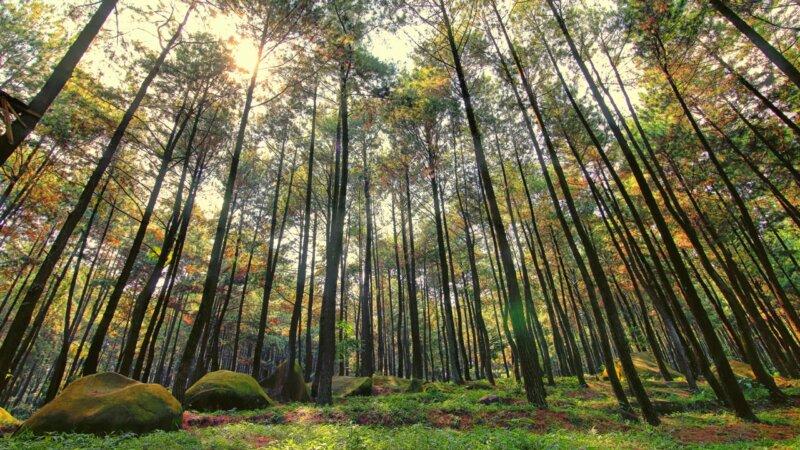 Taman-Wisata-Hutan-Jayagiri
