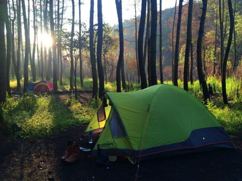 Hutan-Pinus-Gunung-Soputan