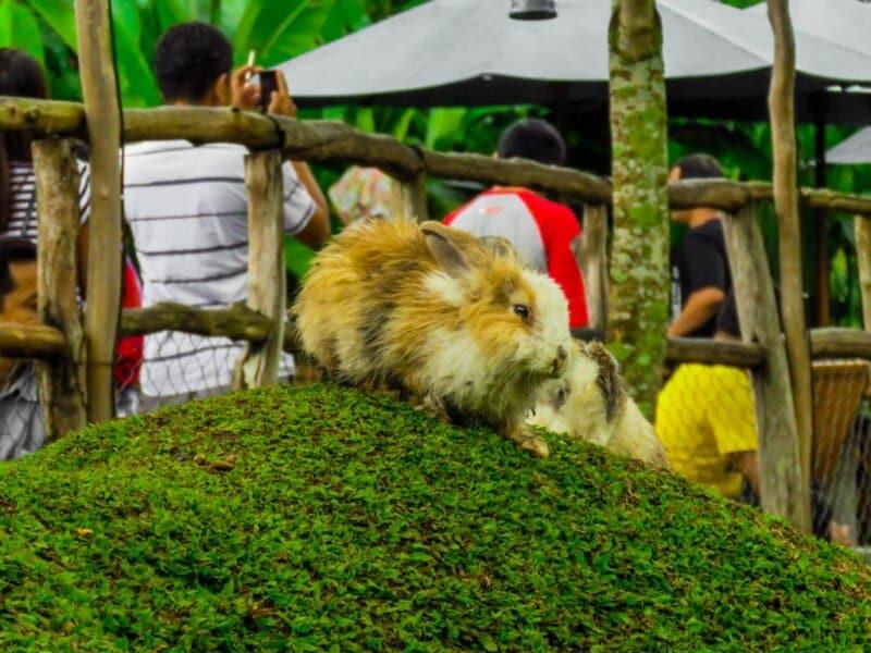 Taman-Kelinci-Ciwidey