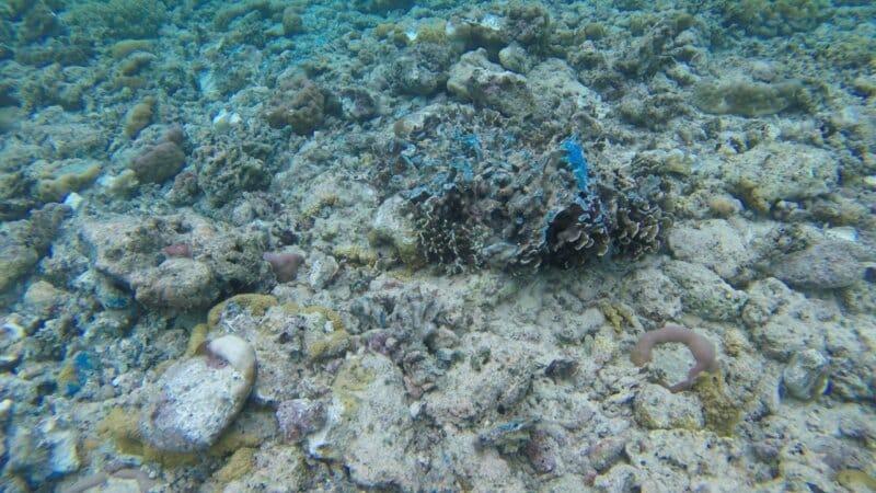 Dulunya Memiliki Ekosistem Bawah Laut yang Rusak