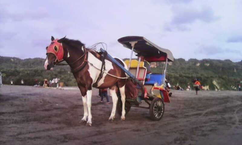 Berkeliling dengan Kereta Kuda