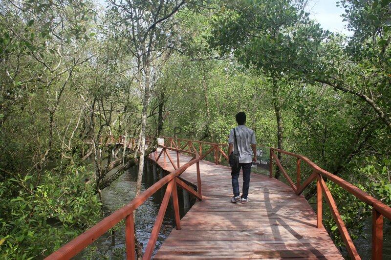 Keasrian Hutan Mangrove