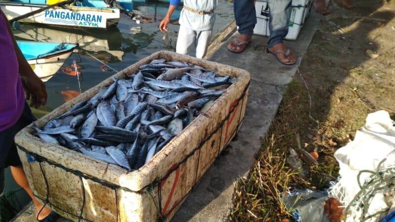 Membeli-Ikan-Segar