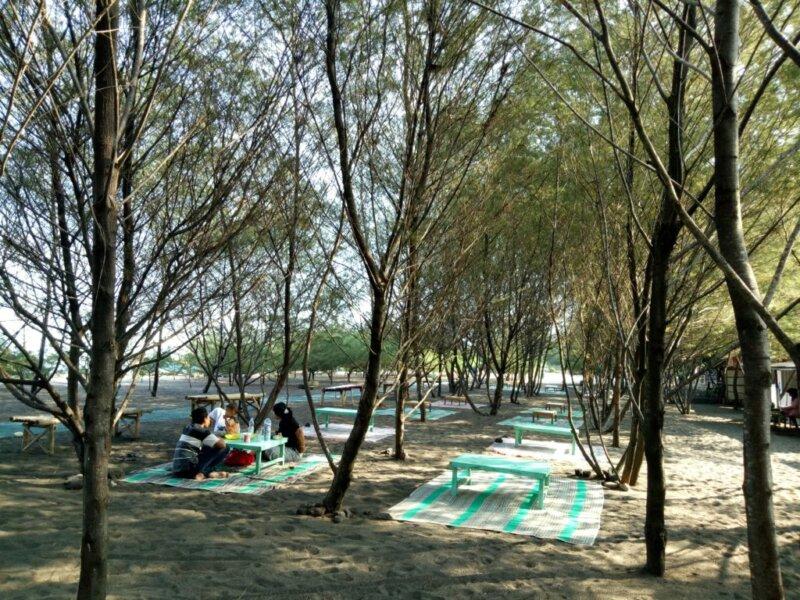 Fakta Menarik Tentang Pohon Cemara di Kawasan Pantai