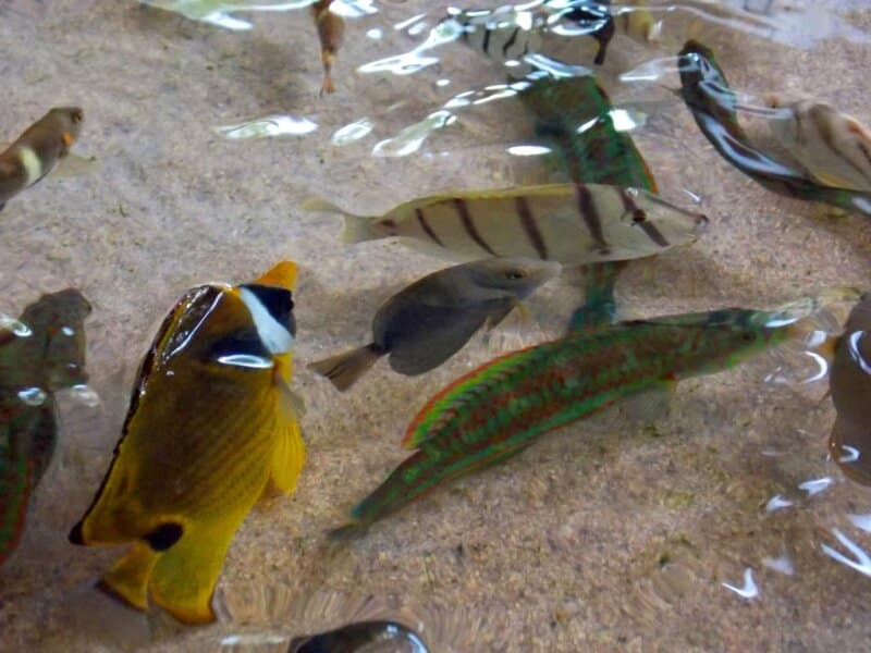 Melihat Ikan Laut Berukuran Kecil