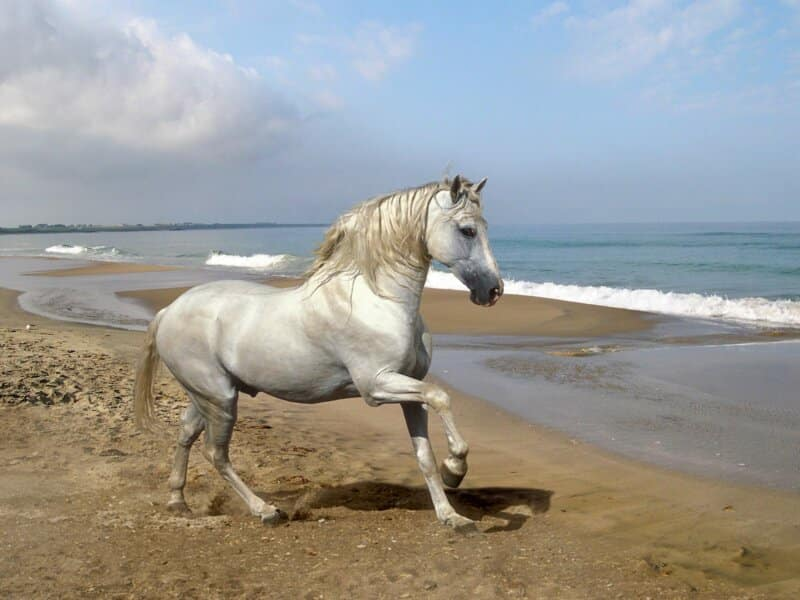 Mitos Kuda Putih