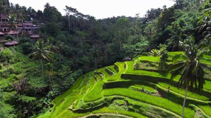 Desa Tegallalang