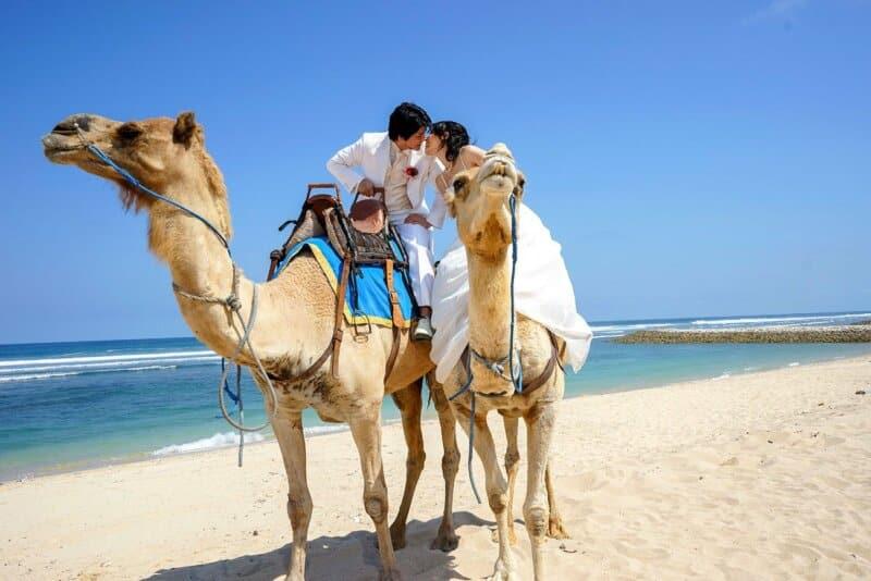 Fasilitas Bali Camel Safari