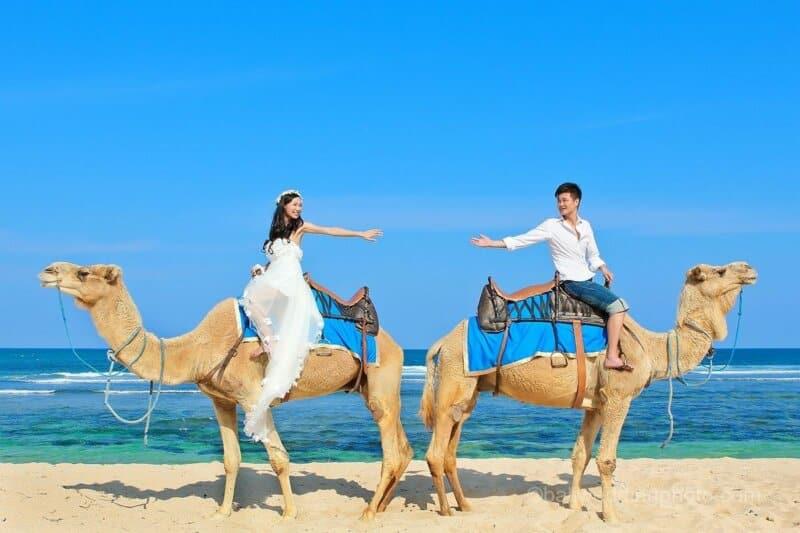 Harga Tiket Masuk dan Naik Unta Bali Camel Safari