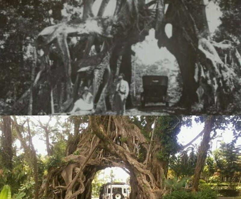 Sejarah Bunut Bolong