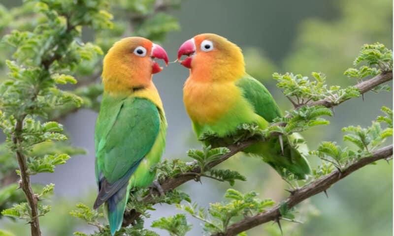 Mengenal-Aneka-Spesies-Burung